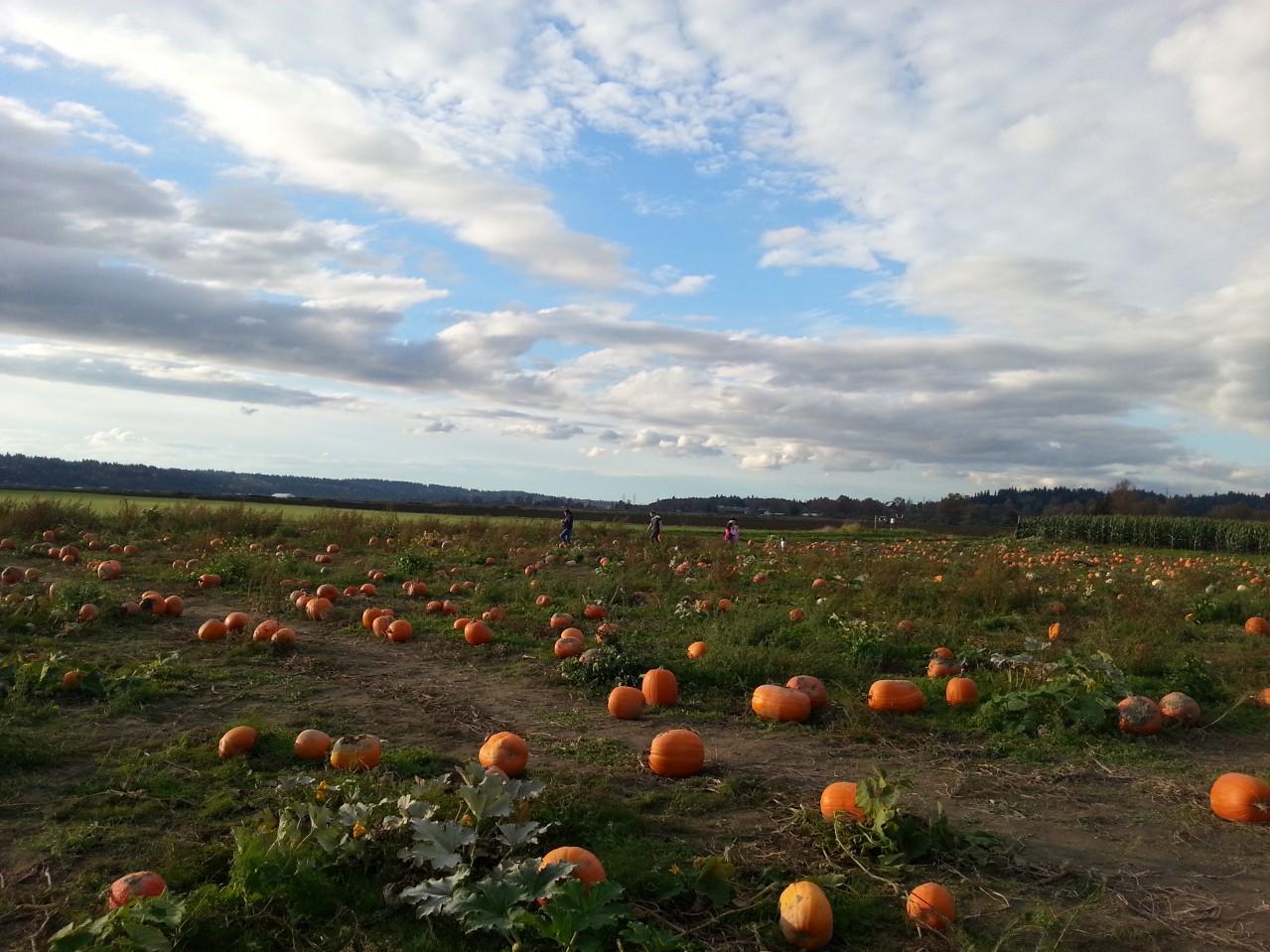 Az pumpkin patch 2014 manhattan